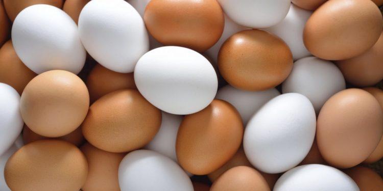 Bactéria presente nos ovos