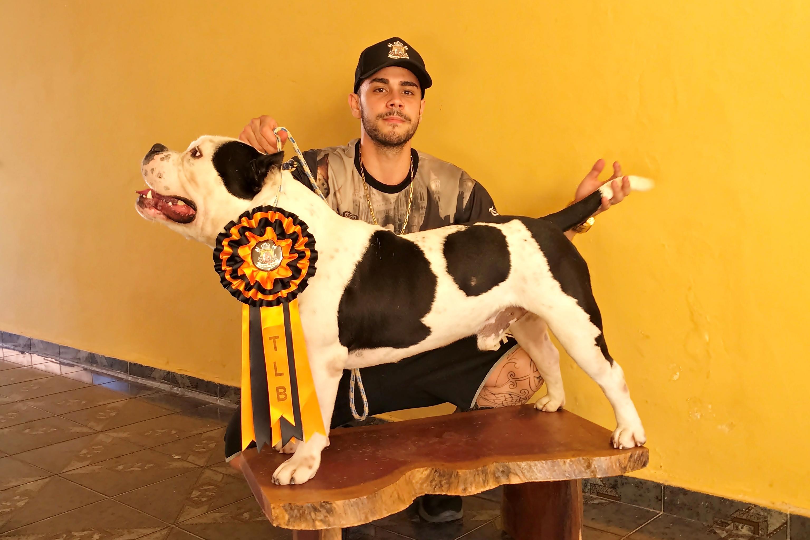 Cachorro campeão em concurso na Venezuela