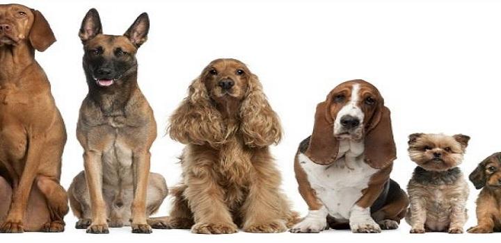 lei que proibe cachorros de latir