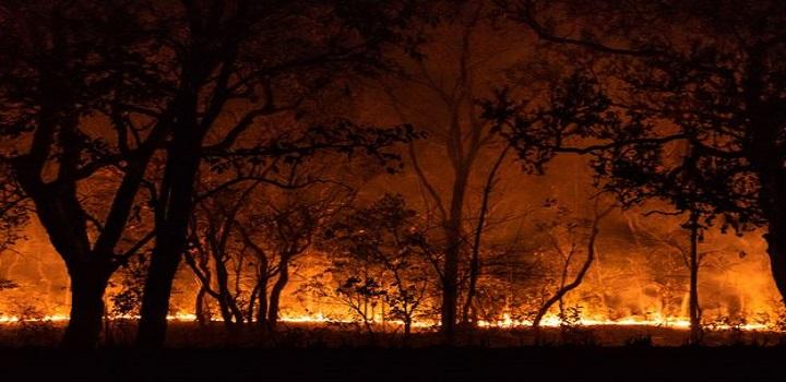 Governo de MT anuncia decreto de calamidade por causa de incêndios florestais