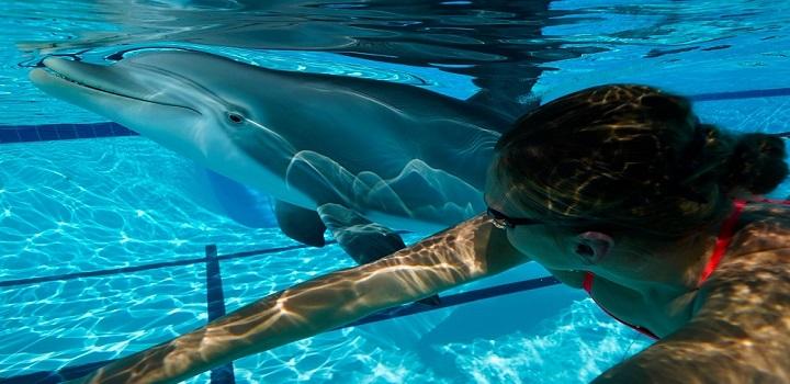 Golfinhos robôs substituirão animais