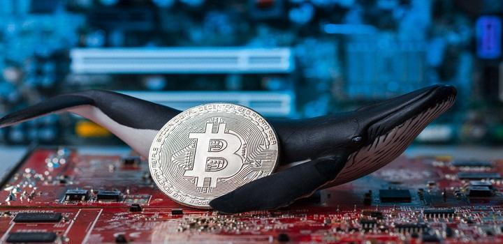 Baleia: criptomoedas paradas na carteira valorizaram 265.000% em nove anos