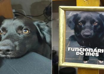 """Os donos de uma loja de calçados de Sorocaba (SP) escolheram um cão como """"funcionário do mês"""""""